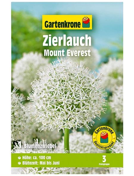 GARTENKRONE Blumenzwiebel »Gartenkrone Allium Mount Everest«