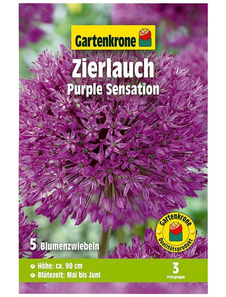 GARTENKRONE Blumenzwiebel »Gartenkrone Allium Purple Sensation«