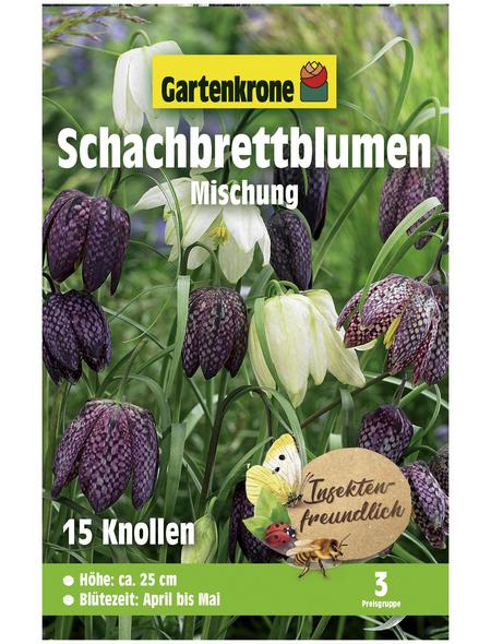 GARTENKRONE Blumenzwiebel »Gartenkrone Fritillaria Meleagris«