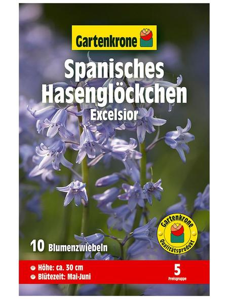 GARTENKRONE Blumenzwiebel »Gartenkrone Hyacinthoides his. Excelsior«
