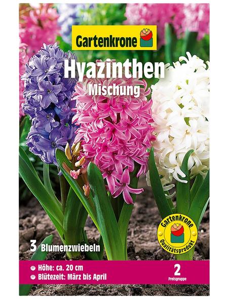 GARTENKRONE Blumenzwiebel »Gartenkrone Hyazinthen Mischung«