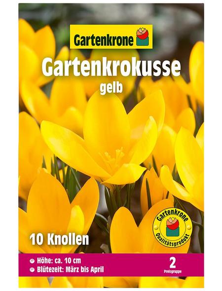 GARTENKRONE Blumenzwiebel »Gartenkrone Krokusse«