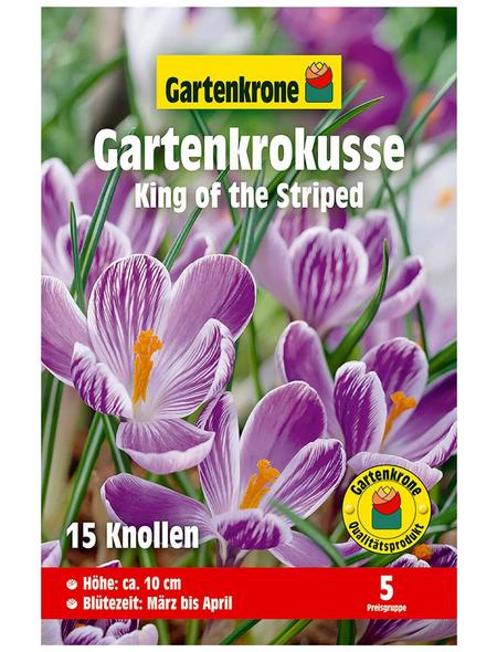 GARTENKRONE Blumenzwiebel »Gartenkrone Krokusse King of the Striped«