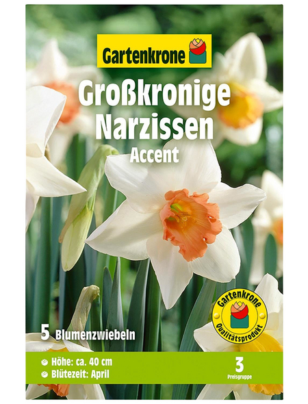 GARTENKRONE Blumenzwiebel »Gartenkrone Narzisse Accent«