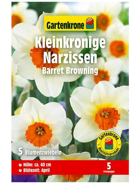 GARTENKRONE Blumenzwiebel »Gartenkrone Narzisse Barret Browning«