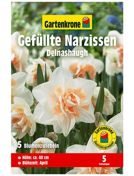GARTENKRONE Blumenzwiebel »Gartenkrone Narzisse Delnashaugh«