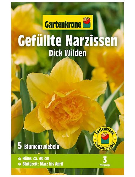 GARTENKRONE Blumenzwiebel »Gartenkrone Narzisse Dick Wilden«