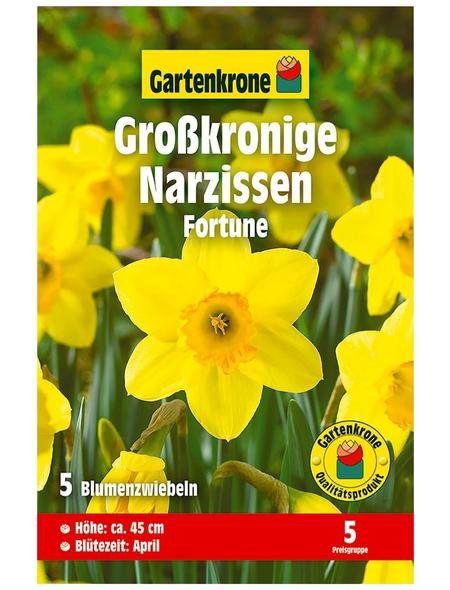 GARTENKRONE Blumenzwiebel »Gartenkrone Narzisse Fortune«