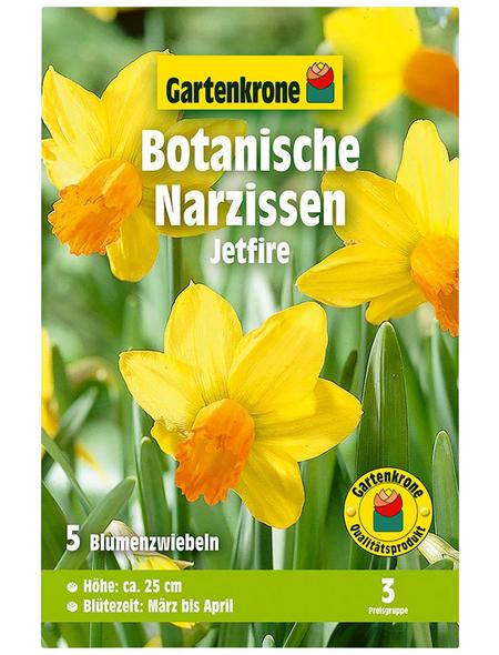 GARTENKRONE Blumenzwiebel »Gartenkrone Narzisse Jetfire«