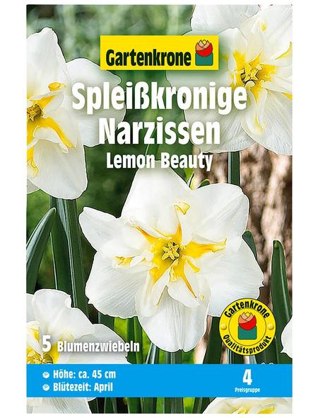 GARTENKRONE Blumenzwiebel »Gartenkrone Narzisse Lemon Beauty«