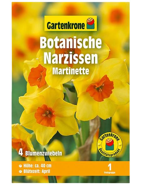 GARTENKRONE Blumenzwiebel »Gartenkrone Narzisse Martinette«