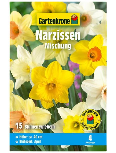 GARTENKRONE Blumenzwiebel »Gartenkrone Narzisse Mischung«