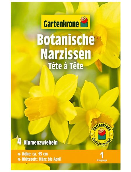 GARTENKRONE Blumenzwiebel »Gartenkrone Narzisse Tete A Tete«