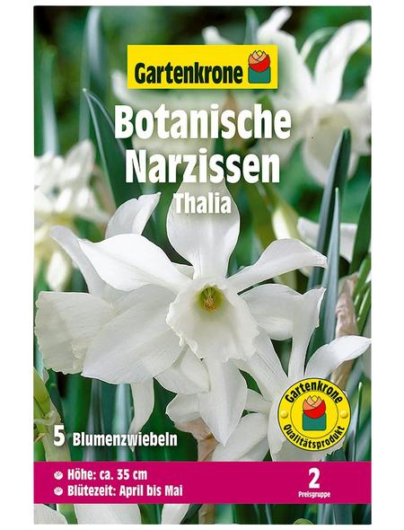 GARTENKRONE Blumenzwiebel »Gartenkrone Narzisse Thalia«