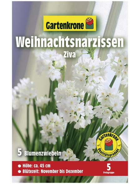 GARTENKRONE Blumenzwiebel »Gartenkrone Narzisse Ziva«