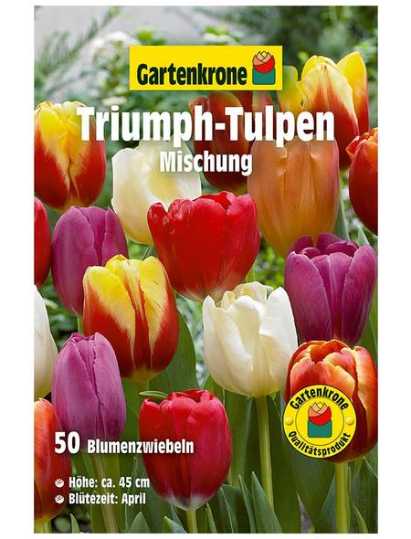 GARTENKRONE Blumenzwiebel »Gartenkrone Regenbogen-Tulpen Mix«