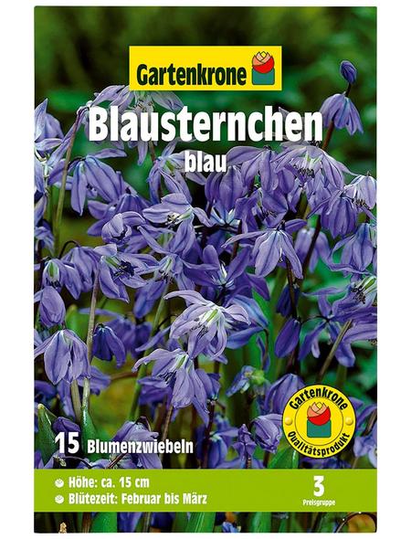 GARTENKRONE Blumenzwiebel »Gartenkrone Scilla Siberica«