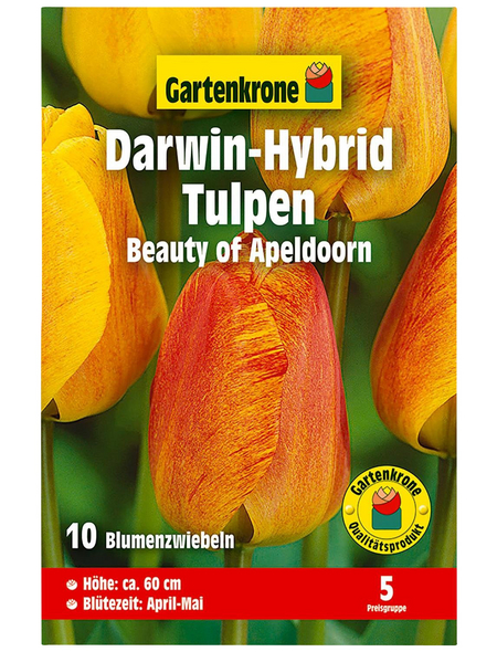 GARTENKRONE Blumenzwiebel »Gartenkrone Tulpe Beauty of Apeldoorn«