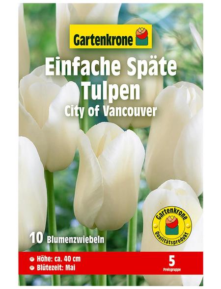GARTENKRONE Blumenzwiebel »Gartenkrone Tulpe City of Vancouver«