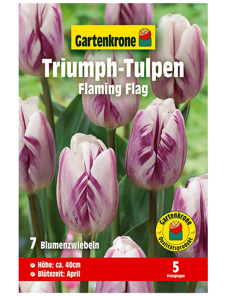 GARTENKRONE Blumenzwiebel »Gartenkrone Tulpe Flaming Flag«