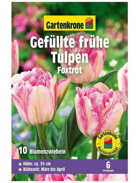 GARTENKRONE Blumenzwiebel »Gartenkrone Tulpe Foxtrot«
