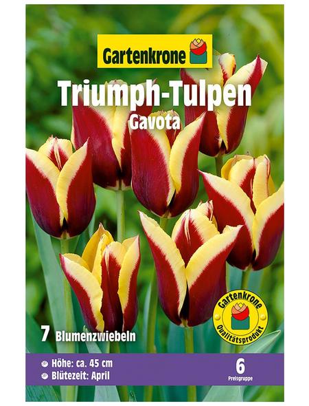 GARTENKRONE Blumenzwiebel »Gartenkrone Tulpe Gavota«