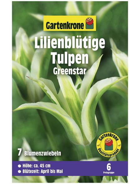GARTENKRONE Blumenzwiebel »Gartenkrone Tulpe Greenstar«