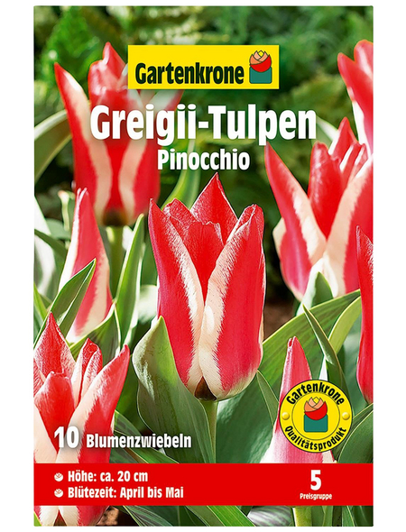 GARTENKRONE Blumenzwiebel »Gartenkrone Tulpe Greigii Pinocchio«