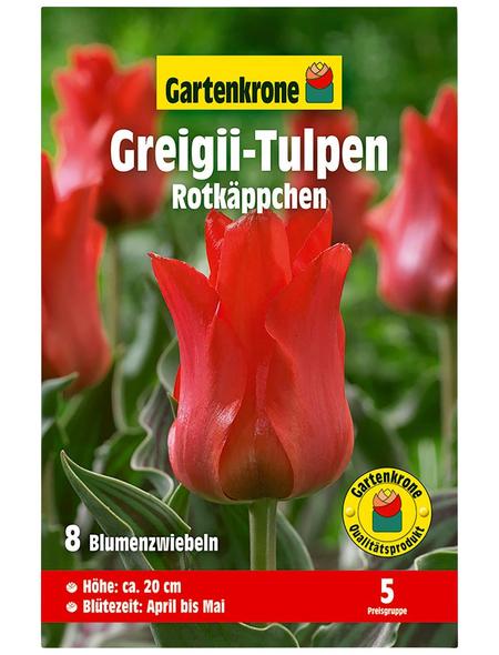GARTENKRONE Blumenzwiebel »Gartenkrone Tulpe Greigii Rotkäppchen«