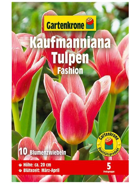 GARTENKRONE Blumenzwiebel »Gartenkrone Tulpe Kaufmanniana Fashion«