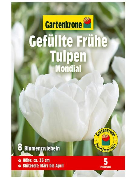 GARTENKRONE Blumenzwiebel »Gartenkrone Tulpe Mondial«