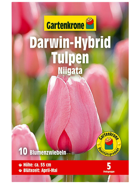 GARTENKRONE Blumenzwiebel »Gartenkrone Tulpe Niigatarosa«