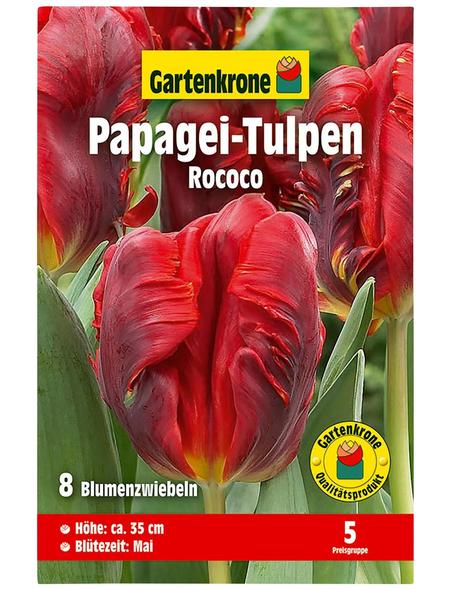 GARTENKRONE Blumenzwiebel »Gartenkrone Tulpe Papagei Rococo«