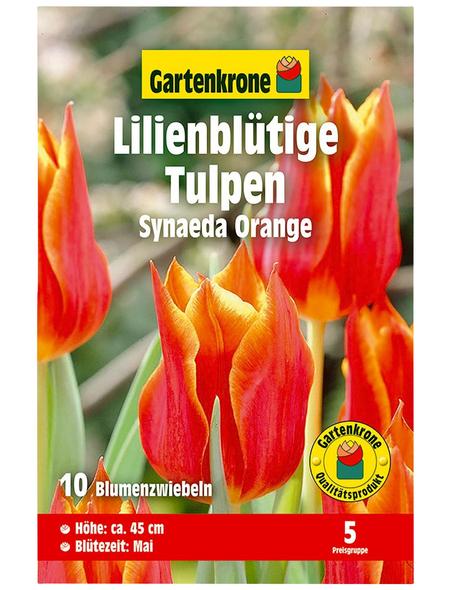 GARTENKRONE Blumenzwiebel »Gartenkrone Tulpe Synaeda Orange«