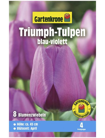 GARTENKRONE Blumenzwiebel »Gartenkrone Tulpe Triumph«