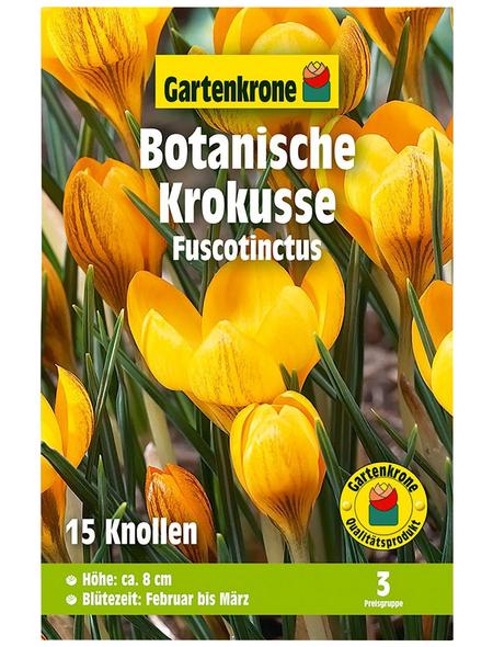 GARTENKRONE Blumenzwiebel »Gartenkrone Wildkrokusse Fuscotinctus«