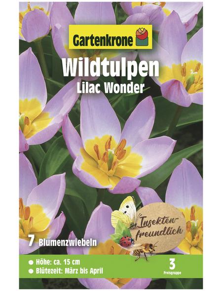 GARTENKRONE Blumenzwiebel »Gartenkrone Wildtulpe Bakeri Lilacwonder«