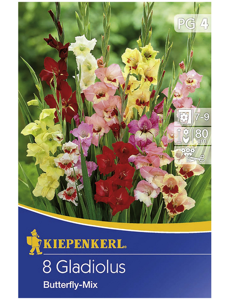 KIEPENKERL Blumenzwiebel Gladiole, Gladiolus Hybrida, Blütenfarbe: mehrfarbig