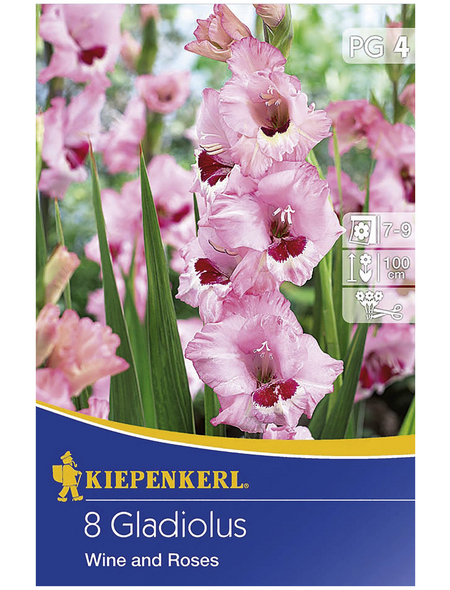 KIEPENKERL Blumenzwiebel Gladiole, Gladiolus Hybrida, Blütenfarbe: rosa