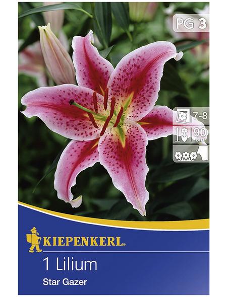KIEPENKERL Blumenzwiebel Lilie, Lilium Hybrida, Blütenfarbe: rosa