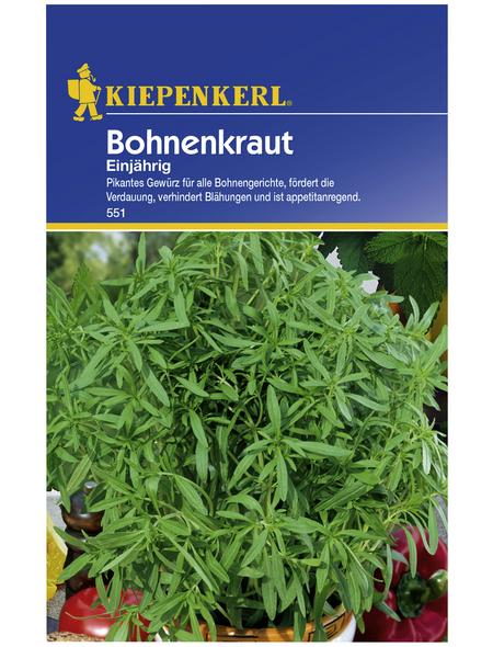KIEPENKERL Bohnenkraut hortensis Satureja