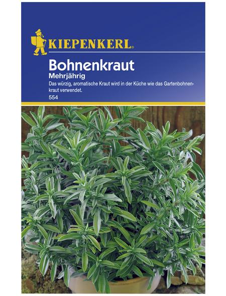 KIEPENKERL Bohnenkraut montana Satureja