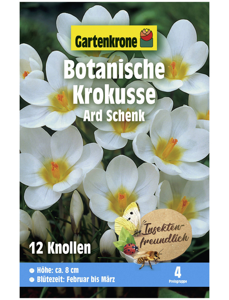 GARTENKRONE Botanischer Krokus Crocus Chrysanthus »Ard Schenk«, weiß