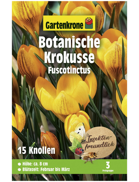 GARTENKRONE Botanischer Krokus Crocus Chrysanthus »Fuscotinctus«, zweifarbig