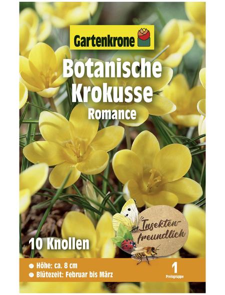 GARTENKRONE Botanischer Krokus Crocus Chrysanthus »Romance«, gelb