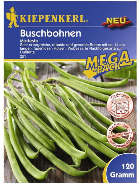 KIEPENKERL Buschbohne vulgaris Phaseolus