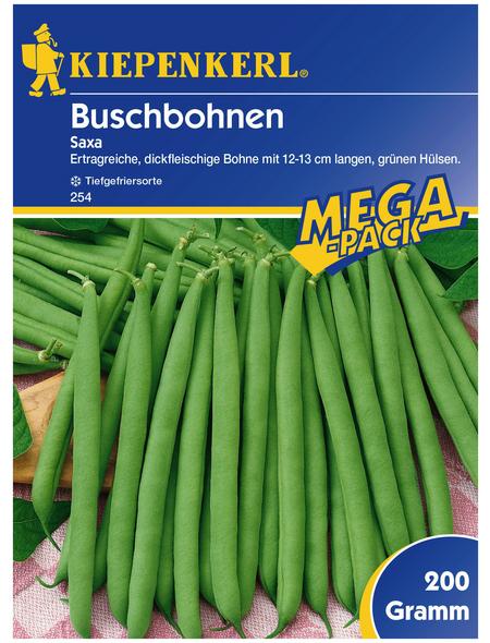 KIEPENKERL Buschbohne vulgaris var. nanus Phaseolus