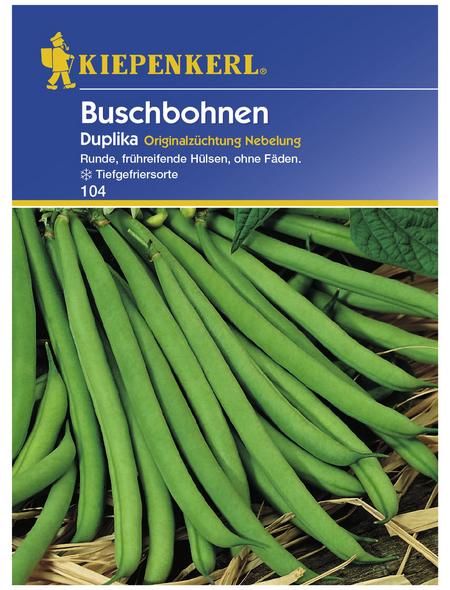 KIEPENKERL Buschbohne vulgaris var. nanus Phaseolus »Duplika«