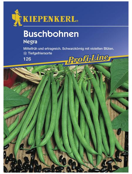 KIEPENKERL Buschbohne vulgaris var. nanus Phaseolus »Negra«