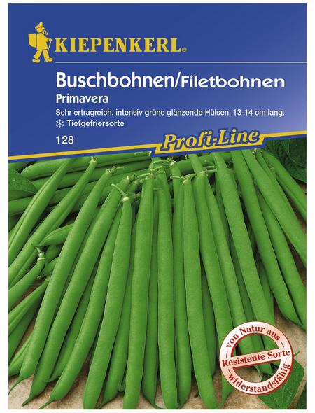 KIEPENKERL Buschbohne vulgaris var. nanus Phaseolus »Primavera«